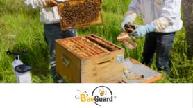 BEEGUARD, spécialiste des ruches connectées, lance une campagne de financement participatif